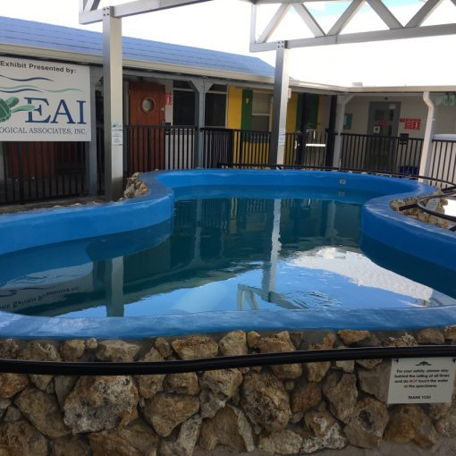 Commercial Pool Resurfacing | Environmental Studies Turtle Tank in Jensen Beach, Florida